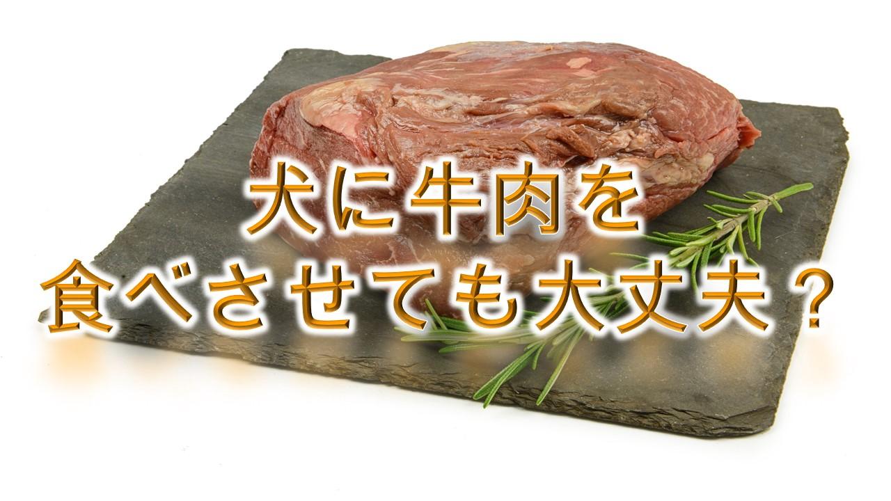 犬に牛肉を食べさせても大丈夫?【正しい与え方や注意点も解説】