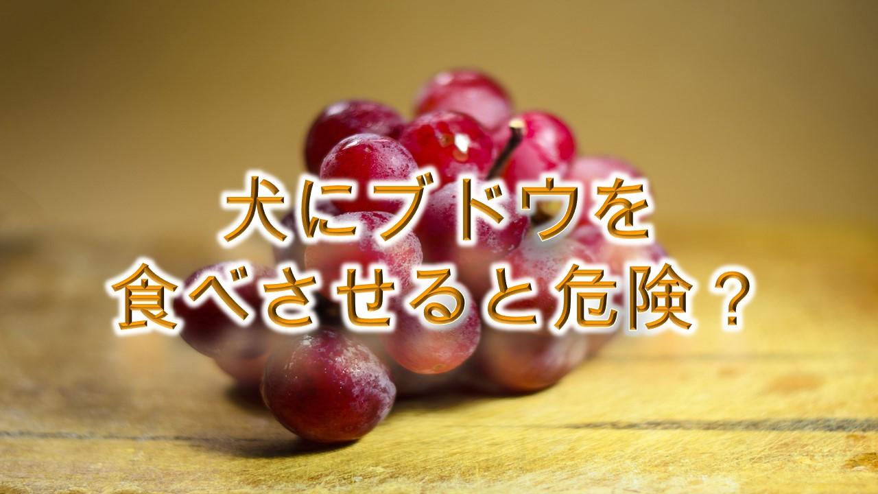 犬にブドウを食べさせると危険?【犬がぶどうを食べると病気や死亡につながる!?】