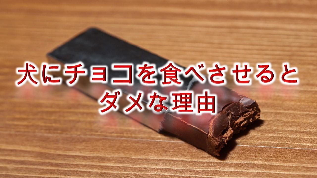 犬にチョコを食べさせるとダメな理由【犬がチョコレートを食べたときにどんな症状がでる?】