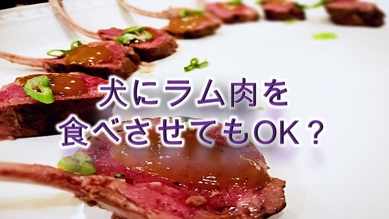 犬にラム肉を食べさせてもOK?【犬にらむ肉を与えるメリットや注意点も解説】