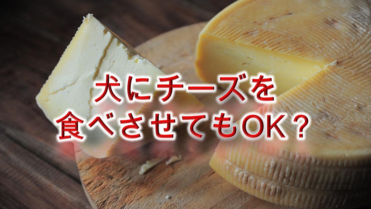 犬にチーズを食べさせてもOK?【適正量や注意点も解説】