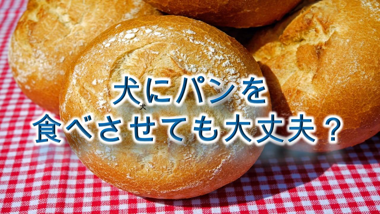 犬にパンを食べさせても大丈夫?与えない方がいい?【注意点をまとめました】