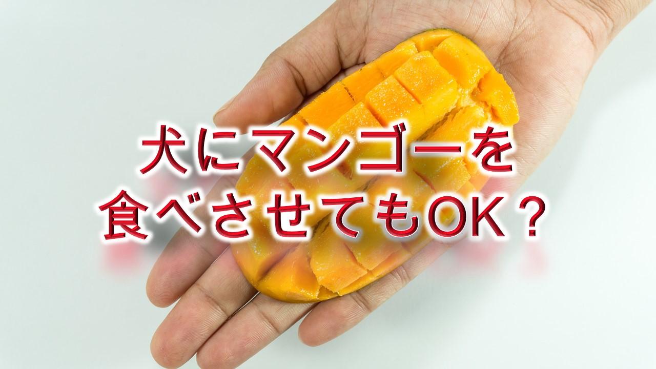 犬にマンゴーを食べさせてもOK?【適正量や注意点も解説】