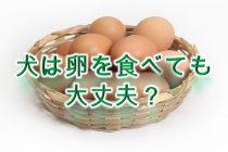 犬は卵を食べても大丈夫?生だと危険?【注意点を徹底解説】