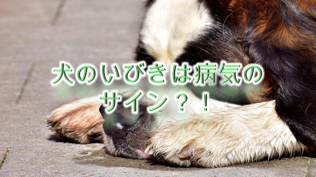 犬のいびきは病気のサイン!?【犬がいびきをする理由と対応策】