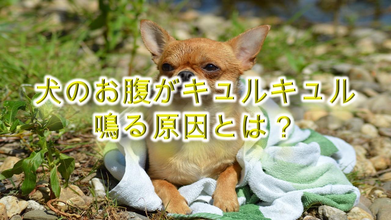 犬のお腹がキュルキュル鳴る原因とは?
