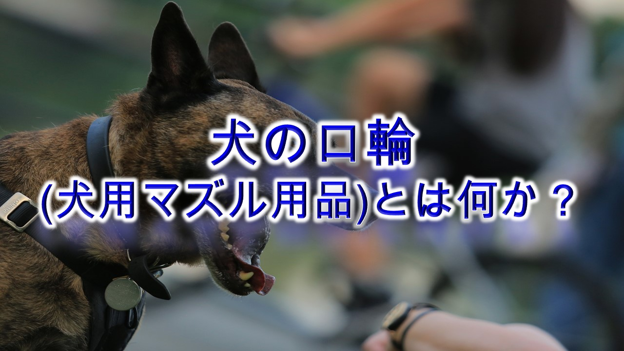 犬の口輪(犬用マズル用品)とは何か?【種類や注意点なども解説】