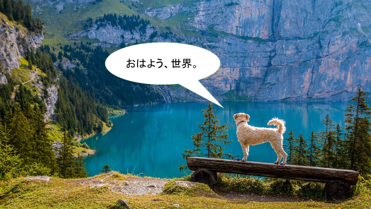 ミックス犬「チワズー」ってどんな小型犬?【値段や性格、特徴をまとめました!】