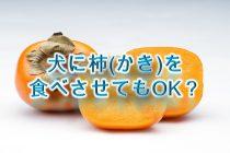 犬が柿(かき)を食べると危険?【犬に柿を与えるメリットや注意点も解説】