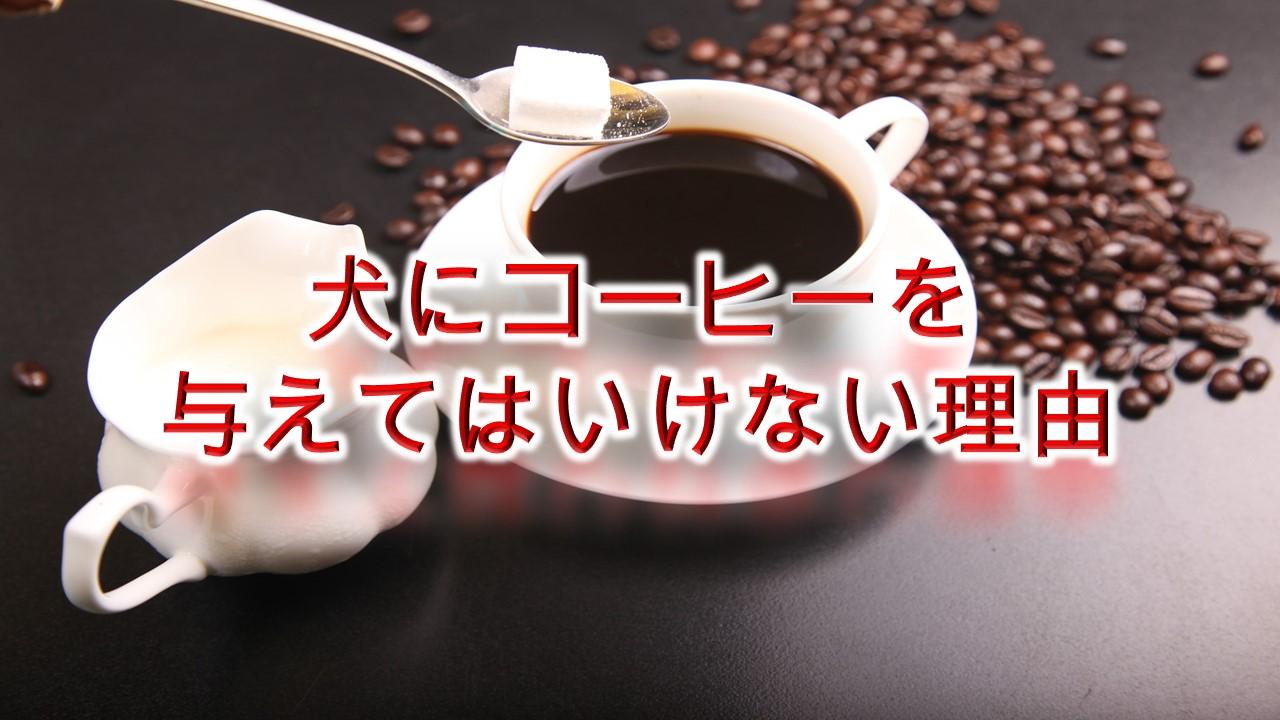 犬にコーヒーを与えてはいけない理由【カフェイン中毒の症状なども解説】