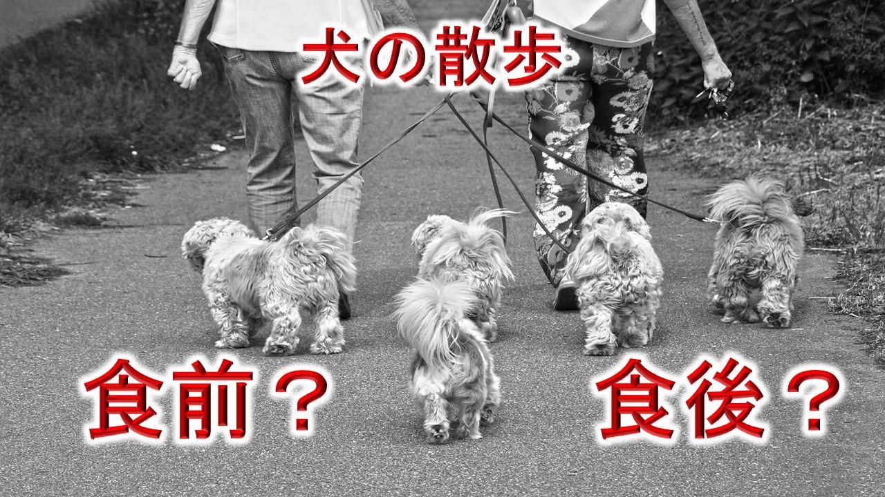 犬の散歩は食前か食後か