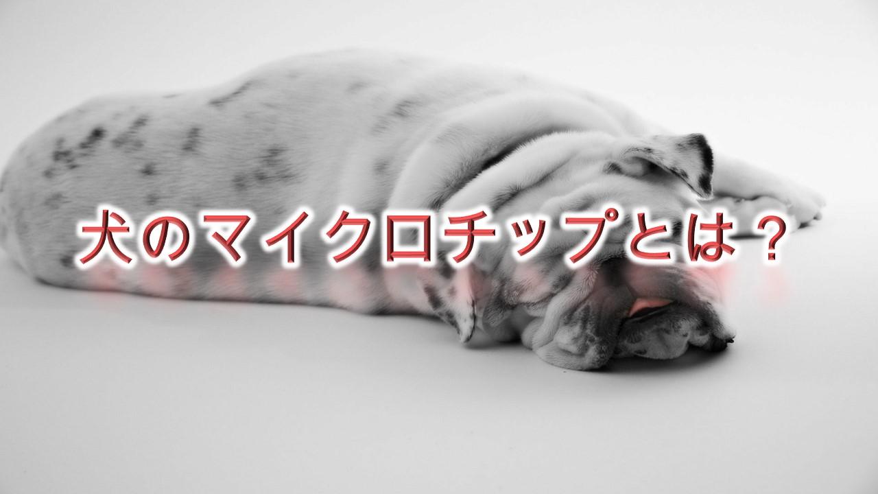 犬のマイクロチップとは何か?メリットやデメリットは?【費用についても解説】