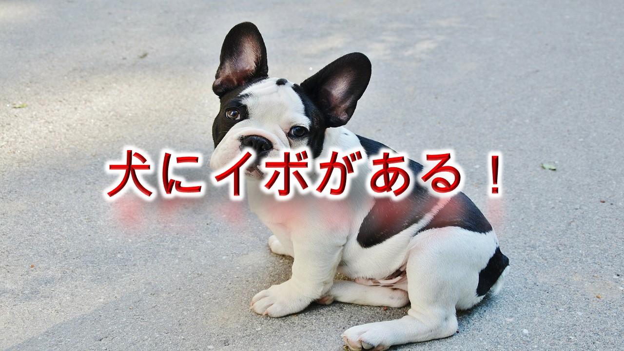 犬にイボがある!これ、悪性?良性?【犬のイボの種類や原因、予防法などについて】