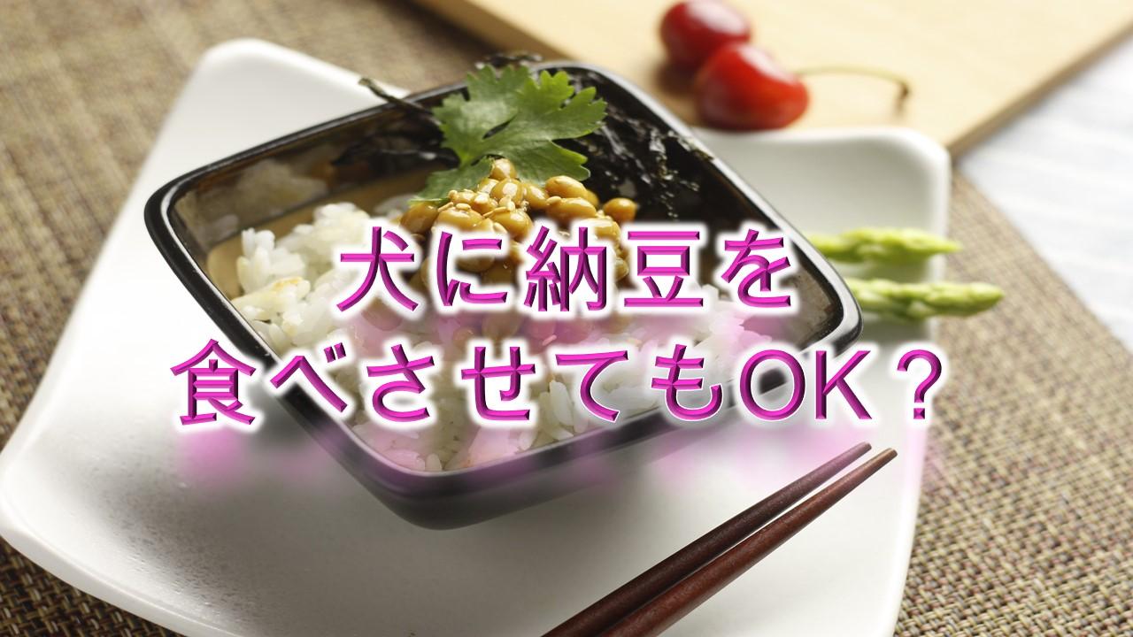 犬が納豆を食べると危険?【犬に納豆を与えるメリットや注意点も解説】