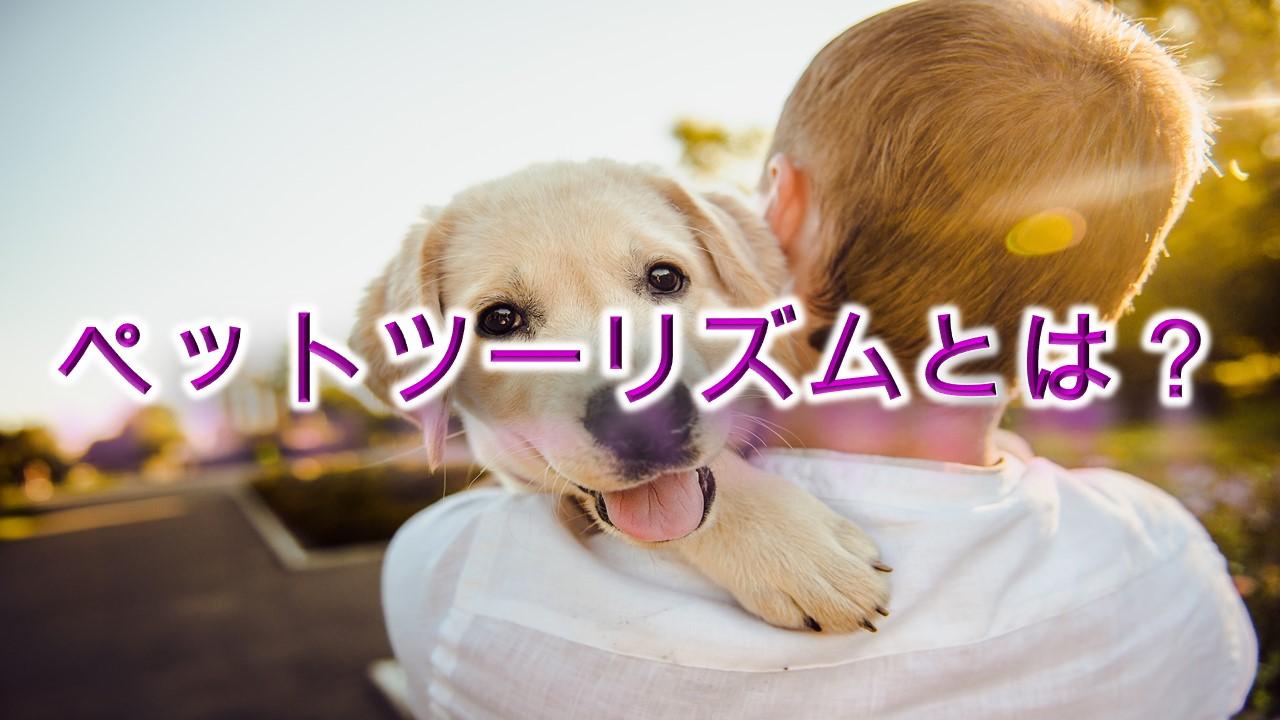 ペットツーリズムとは?【愛犬を旅行へ連れていきたい愛犬家は要チェック】
