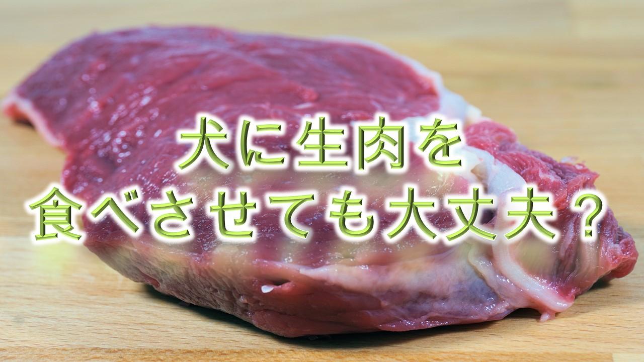 犬に生肉を食べさせてもOK?【犬に生肉を与えるメリットや注意点も解説】