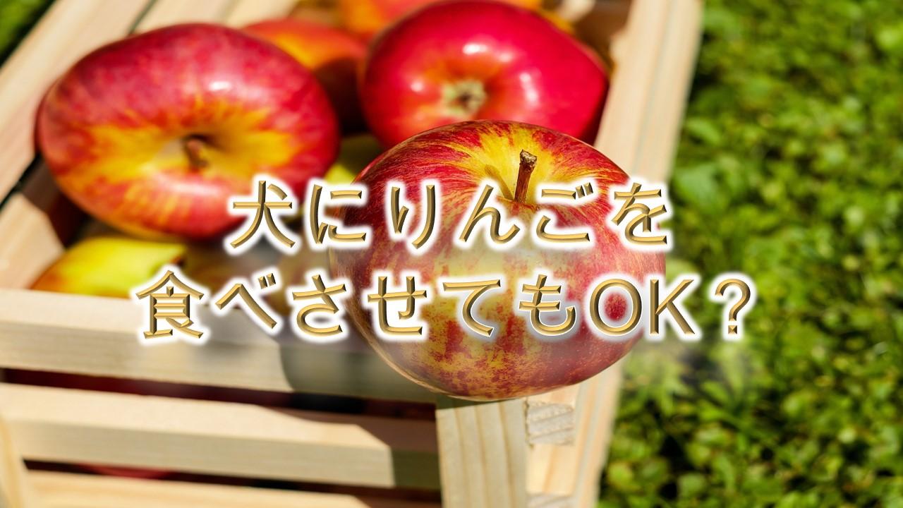 犬がりんごを食べると危険?【犬にリンゴを与えるメリットや注意点も解説】