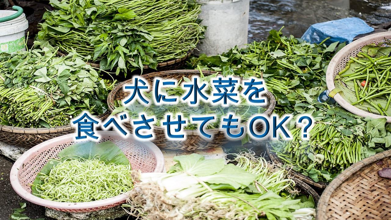 犬が水菜を食べると危険?【犬に水菜を与えるメリットや注意点も解説】