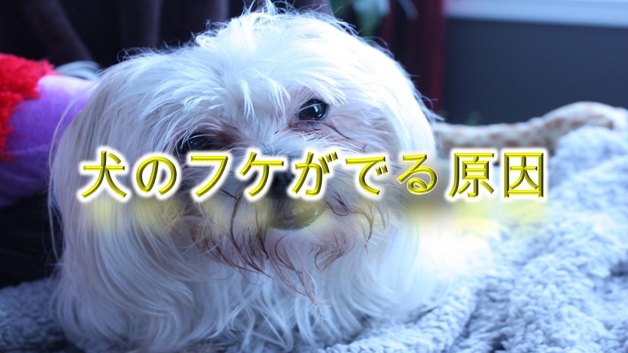 犬のフケがでる原因を徹底解説【犬のフケは病気と関係がある!?】
