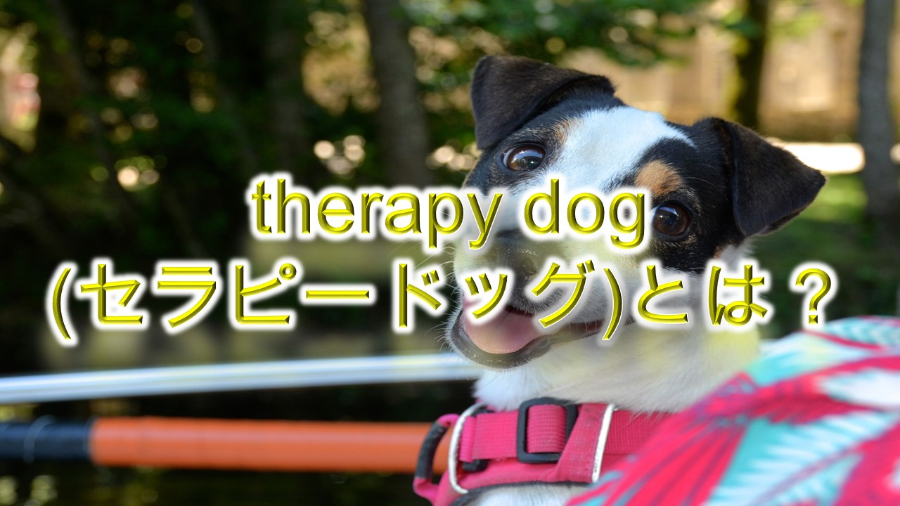 therapy dog(セラピードッグ)とは何か?ドッグセラピー?【研究が証明した効果も紹介】