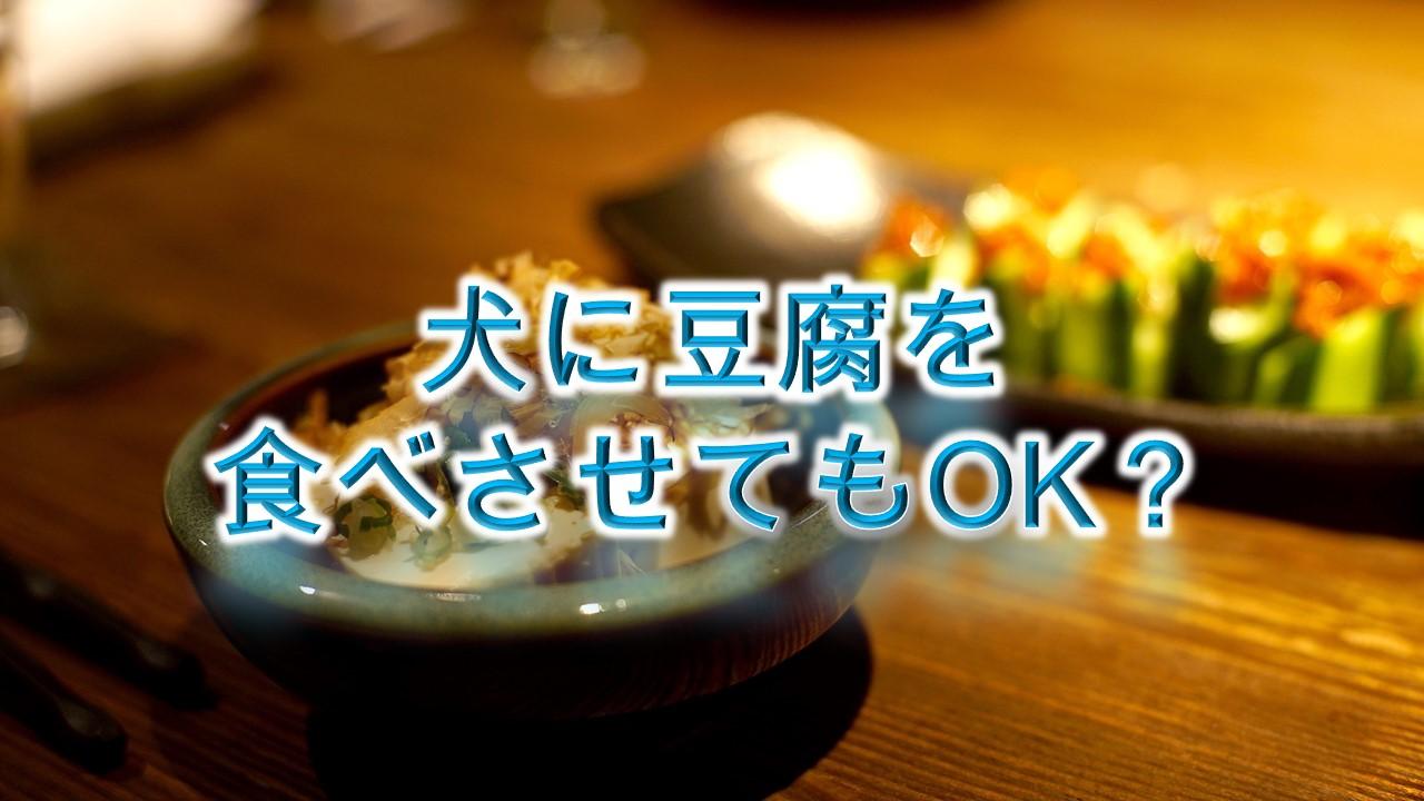 犬に豆腐を食べさせてもOK?【犬にとうふを与えるメリットや注意点も解説】