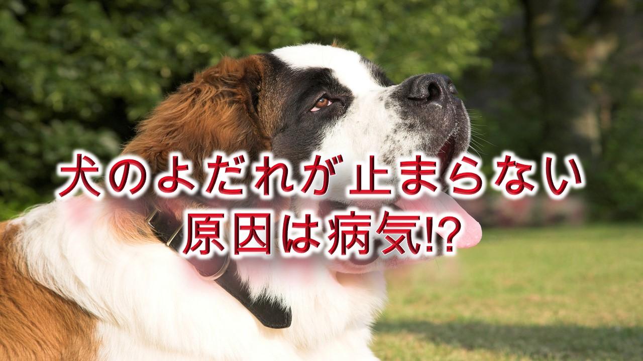 犬のよだれが止まらない原因は病気!?【犬がぽたぽたとよだれを垂らす理由など】