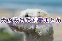 犬の抜け毛対策まとめ【犬の抜け毛がひどい時の原因も解説】