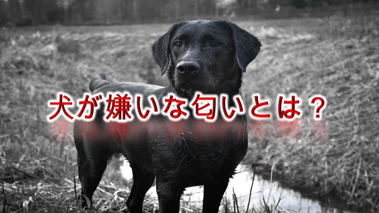 犬が嫌いな匂いとは?嫌がる香りがある?【犬はどんなにおいが苦手なのか。】
