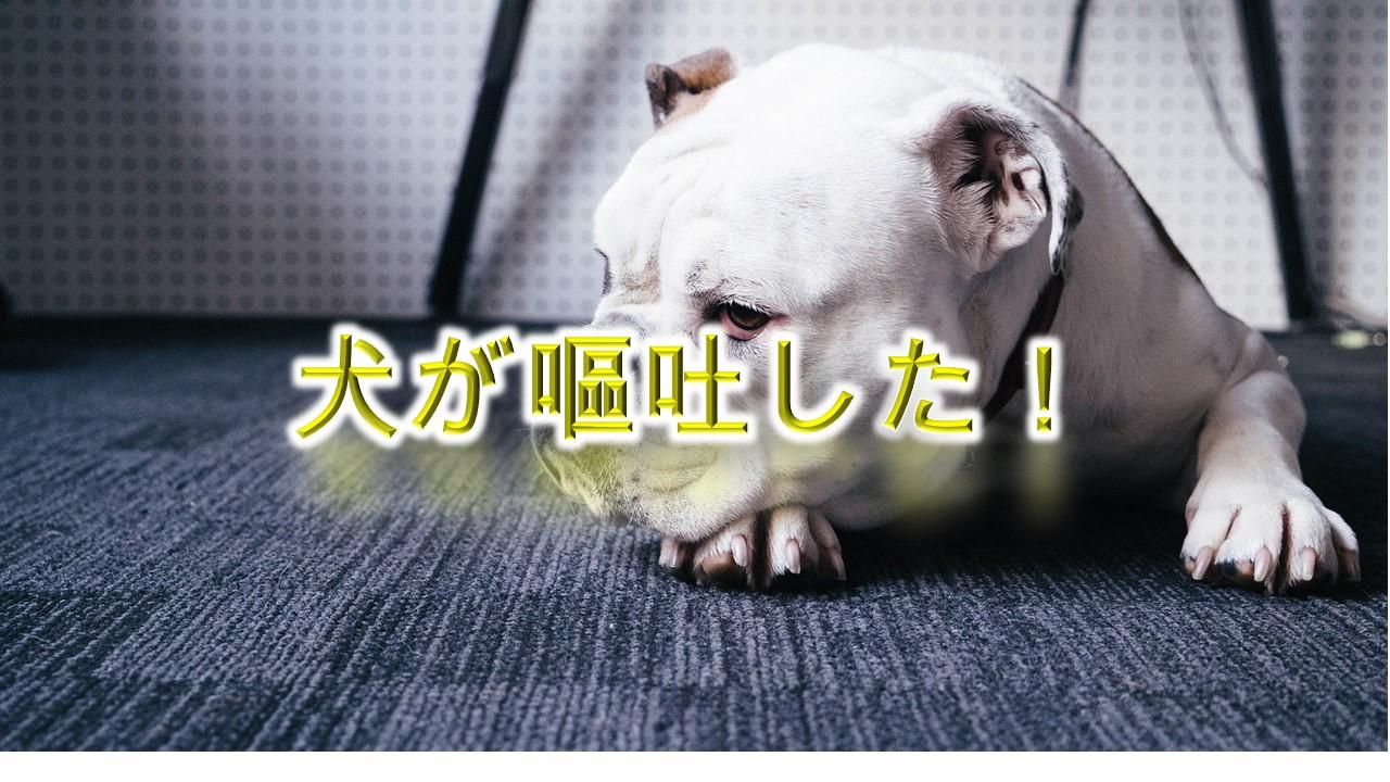 わ!犬が嘔吐した!【犬が吐く原因や種類を解説】