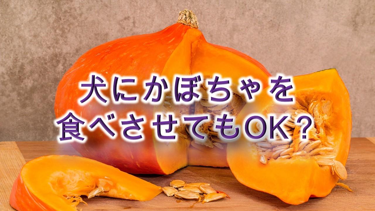 犬にかぼちゃを食べさせてもOK?【犬にカボチャを与えるメリットや注意点も解説】