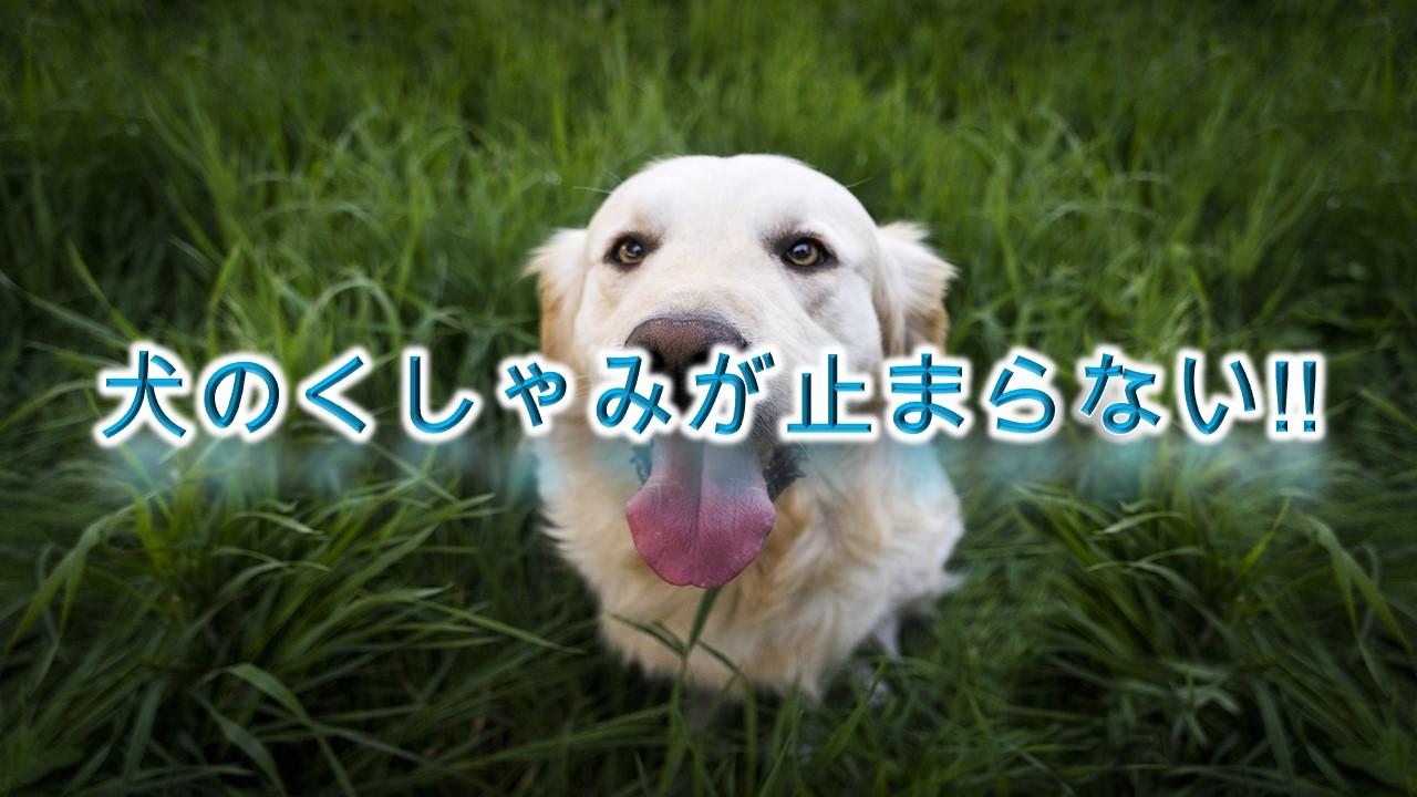 犬のくしゃみが止まらない!!病気の前兆?【犬が連続でくしゃみをする原因や理由】