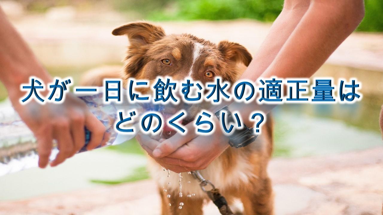 犬が一日に飲む水の適正量はどのくらい?飲み過ぎは危険?【犬が1日に必要な水分量】