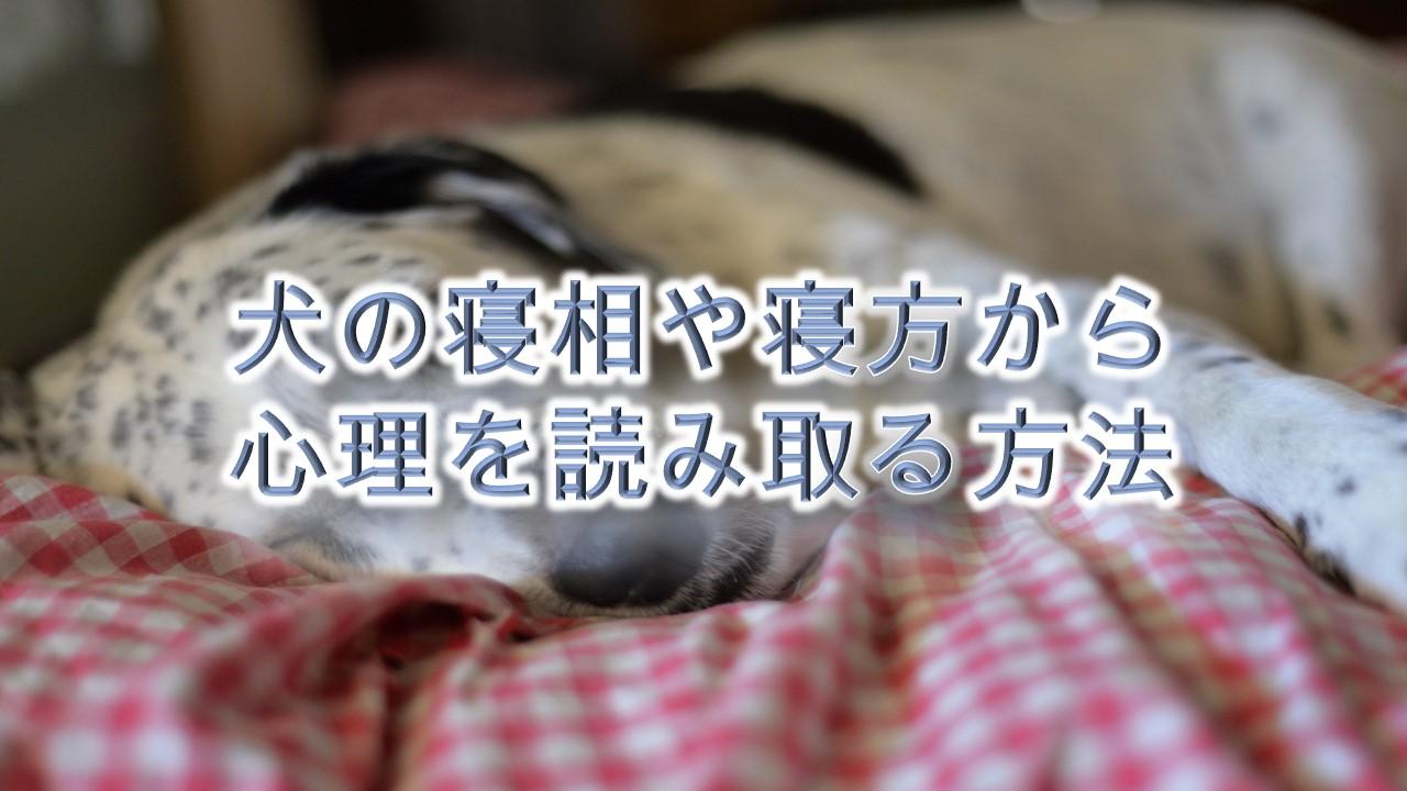 犬の寝相や寝方から心理を読み取る方法