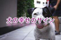 幸せのサイン?犬が幸福を感じている時に見せる行動や仕草まとめ