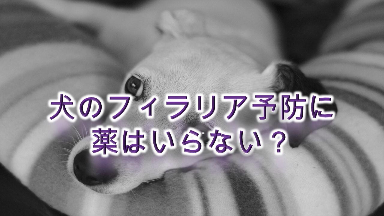 犬のフィラリア予防に薬はいらない?【フィラリア予防薬の値段や料金も紹介】
