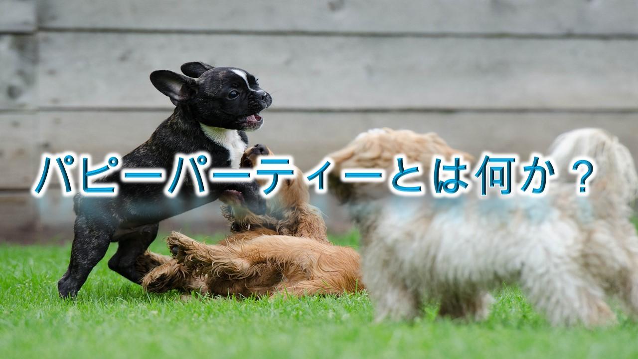 パピーパーティーとは何か?【子犬のしつけにおすすめです。】