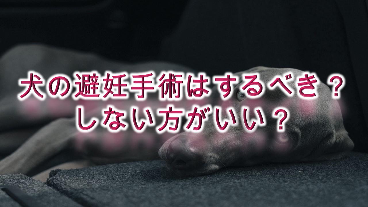 犬の避妊手術はするべき?しない方がいい?【かかる料金や、適正時期、注意点なども解説】