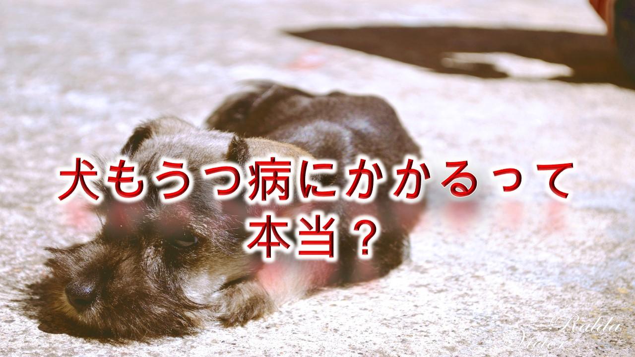 犬もうつ病にかかるって本当?【原因と症状、予防対策も解説】