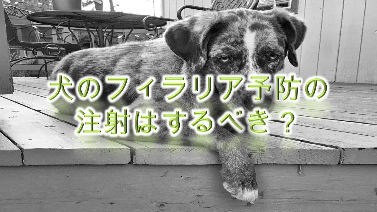 犬のフィラリア予防の注射はするべき?【飲み薬だけだとダメ?】