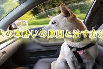 犬の車酔いの原因と治す方法【犬の車酔いで困っている愛犬家の飼い主へ】