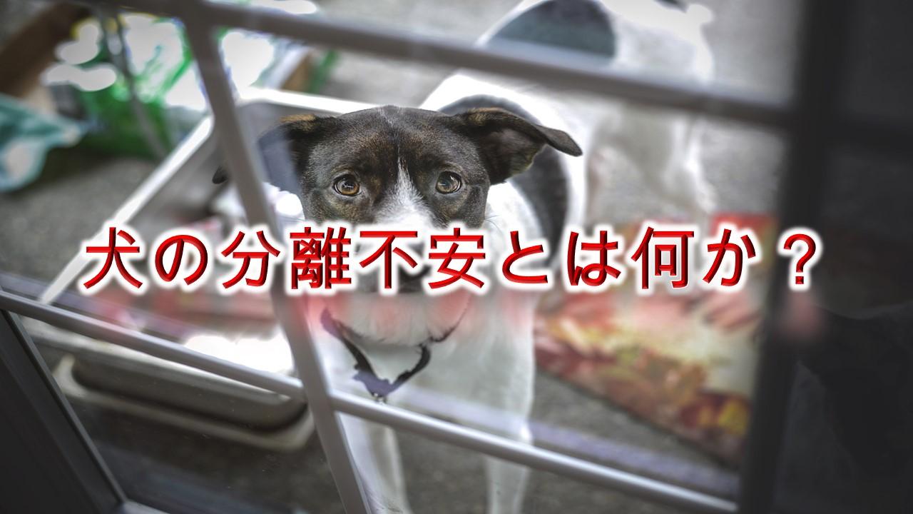 犬の分離不安とは何か?【チェックの仕方や、治すためトレーニング方法も紹介】