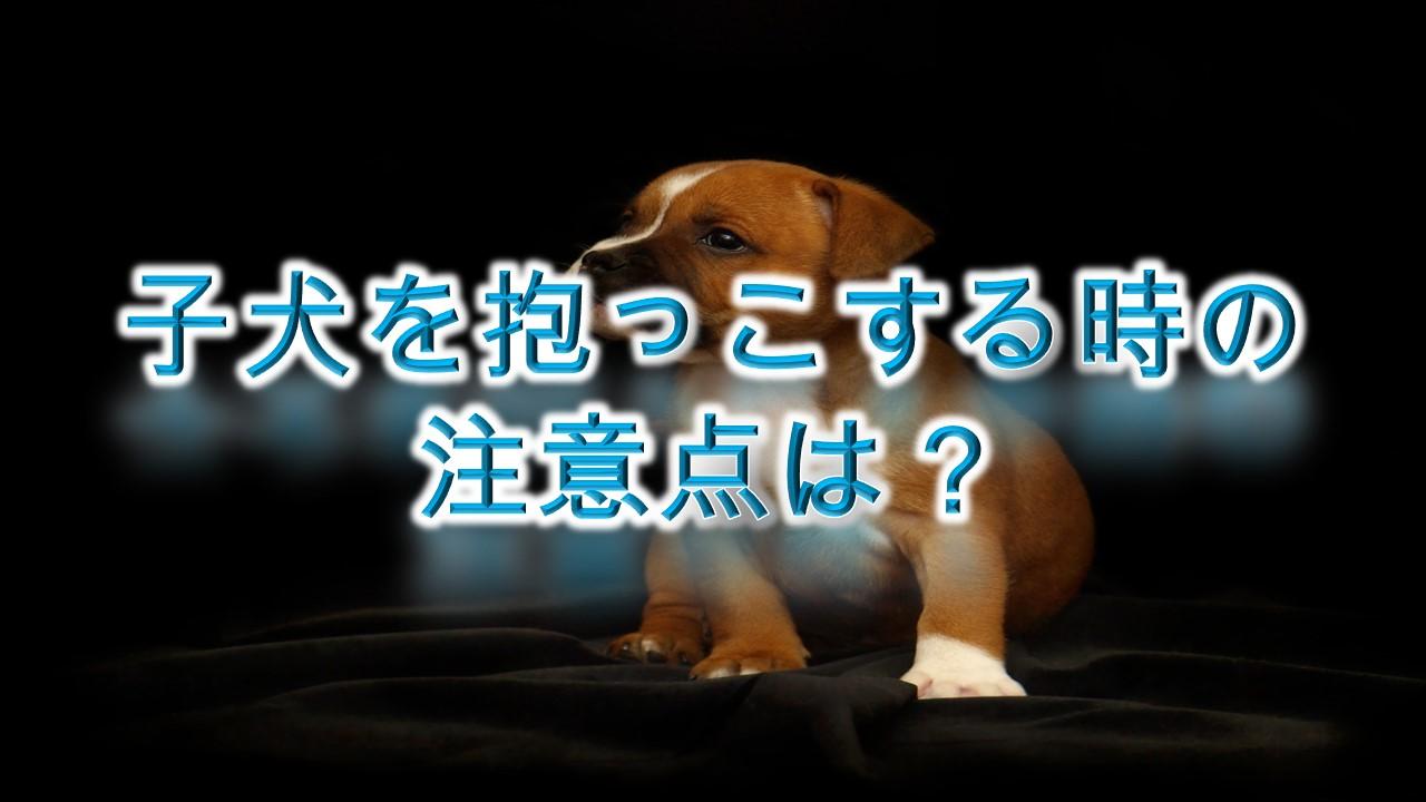 子犬を抱っこする時の注意点は?【嫌がる原因や、正しい抱っこの仕方なども紹介】
