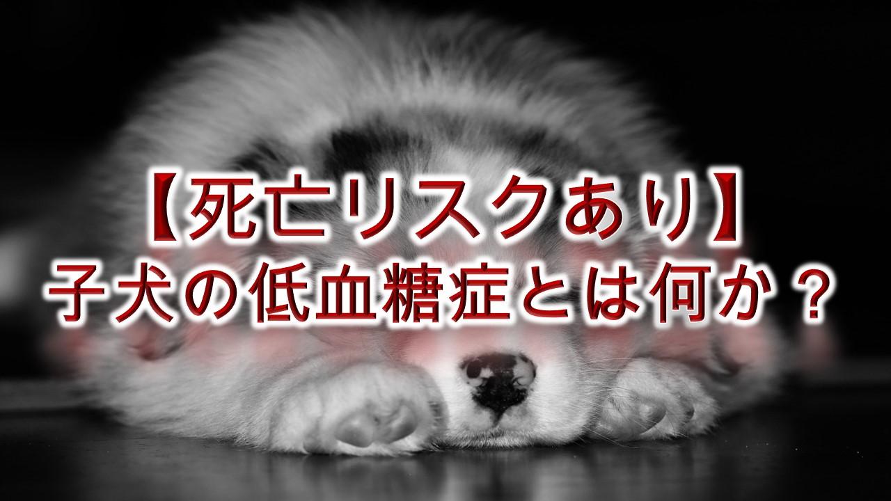 【死亡リスクあり】子犬の低血糖症とは何か?わかりやすく簡単な言葉で解説
