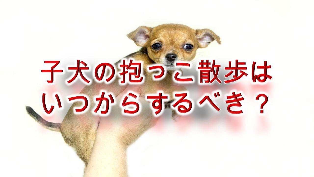 子犬の抱っこ散歩はいつからするべき?【抱っこ散歩のコツや注意点も解説】