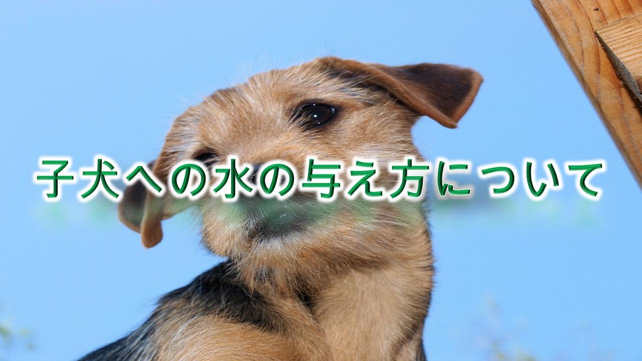 子犬への水の与え方について【子犬が水を飲まない。。と悩む愛犬家へ】