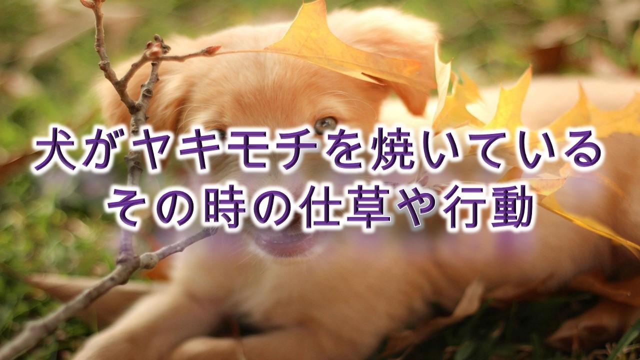 犬がヤキモチを焼いている時の仕草や行動