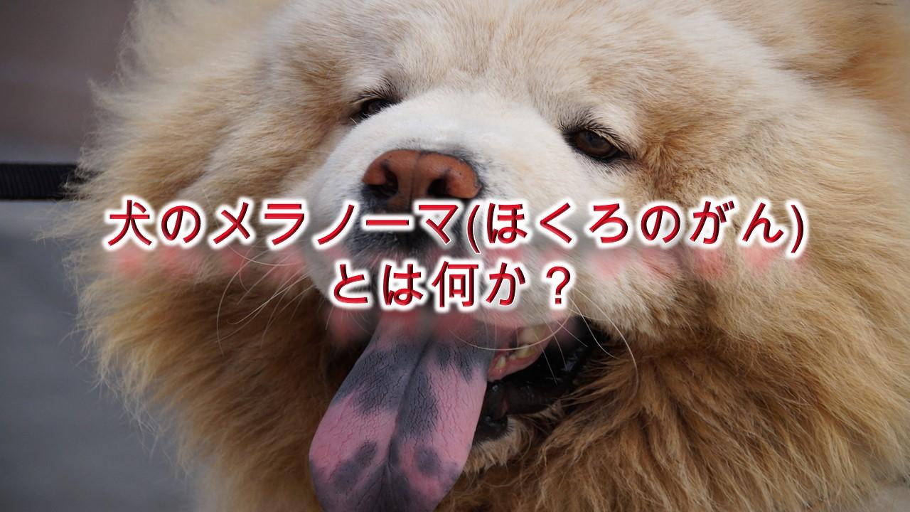 犬のメラノーマ(ほくろのがん)とは何か?【わかりやすく簡単な言葉で解説】