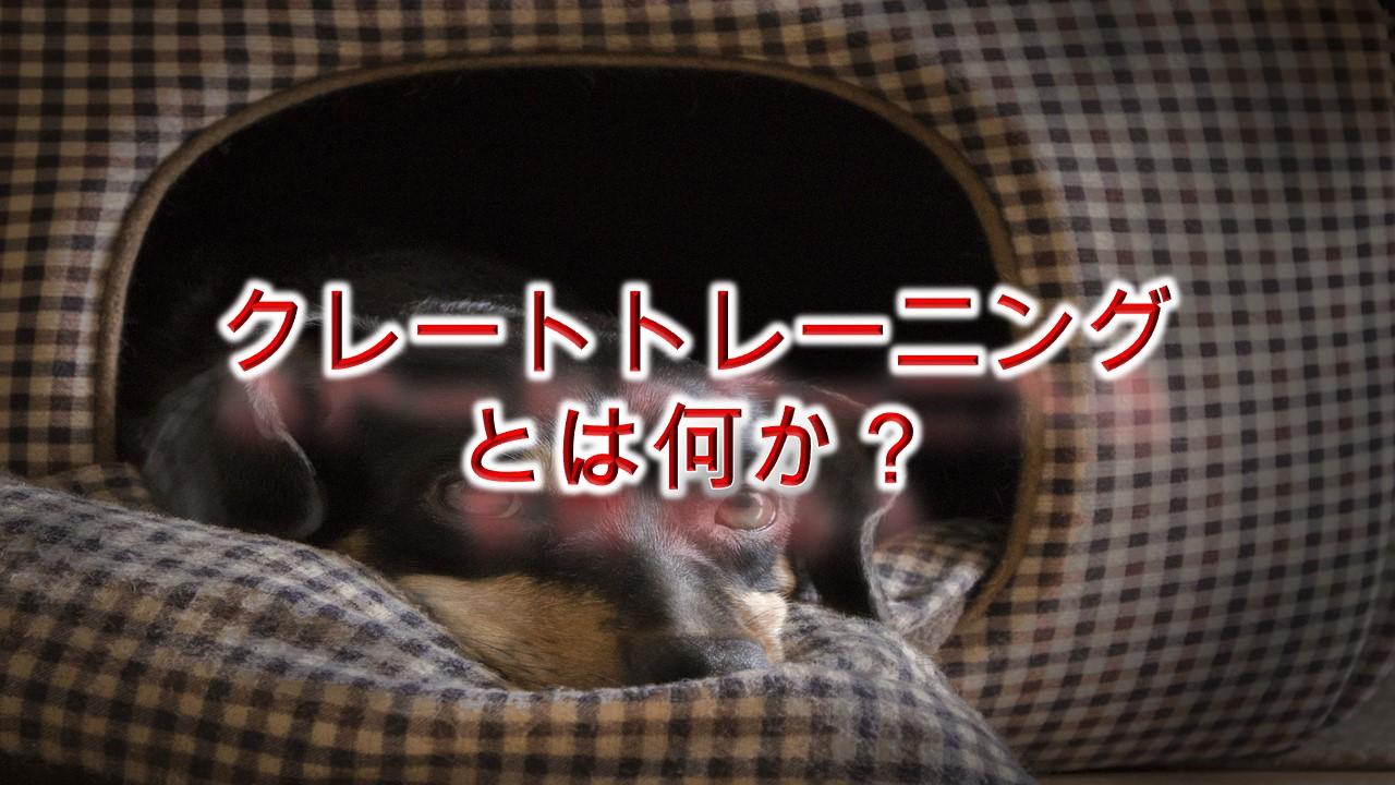 子犬のクレートトレーニングとは何か?メリットは何?【具体的なやり方なども解説】