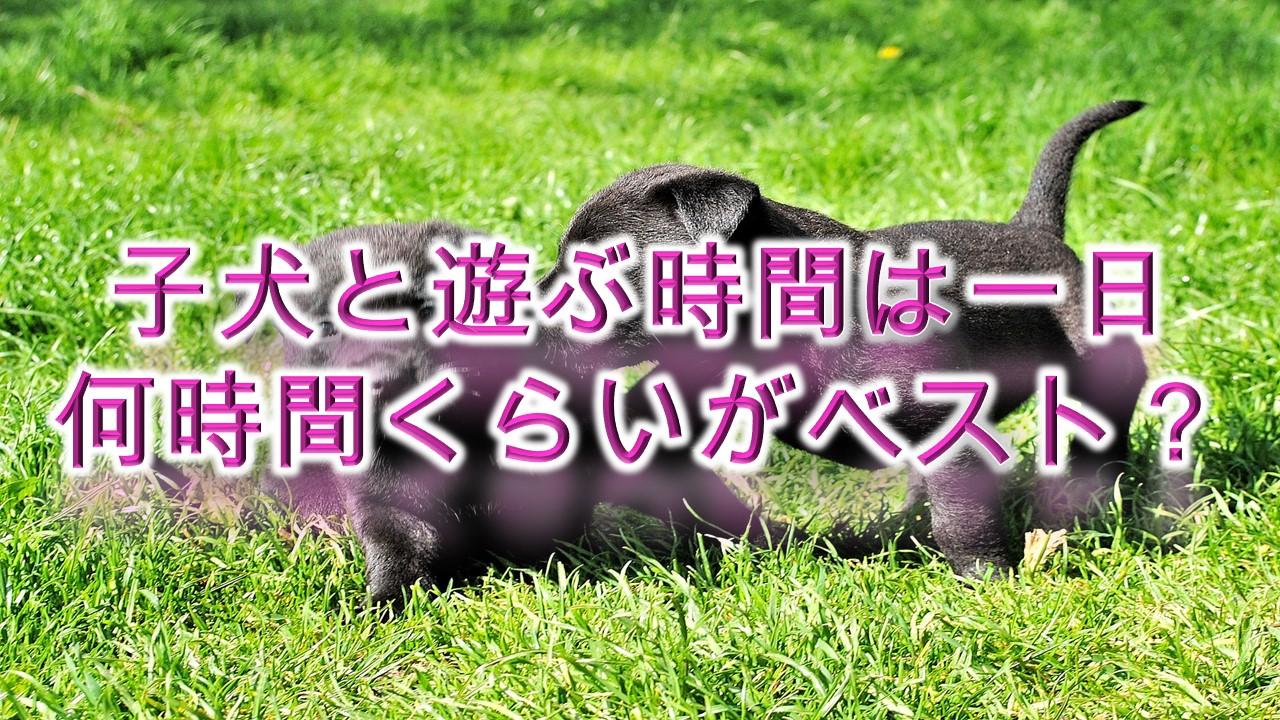 子犬と遊ぶ時間は一日何時間くらいがベスト?【遊びすぎは危険?】