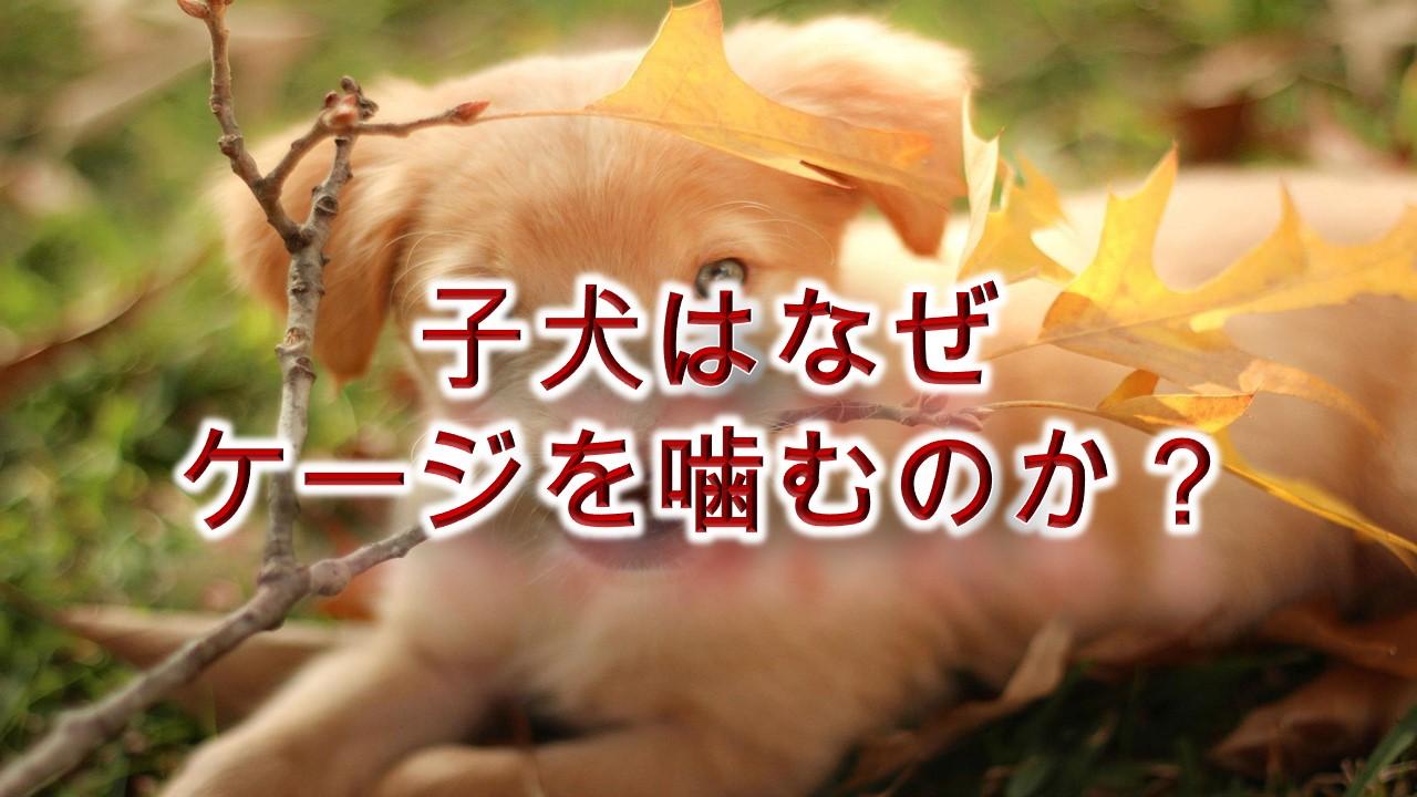 子犬はなぜケージを噛むのか?【原因を知り、対策を。】
